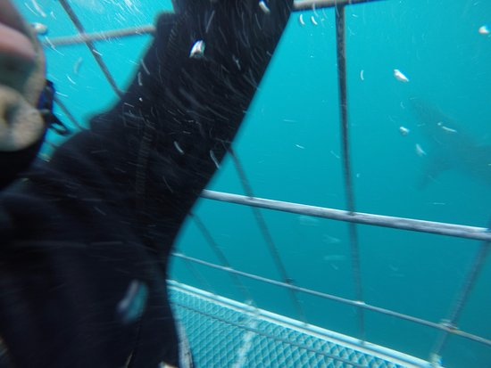 Gansbaai, South Africa: Check out the cages floor..totally safe/