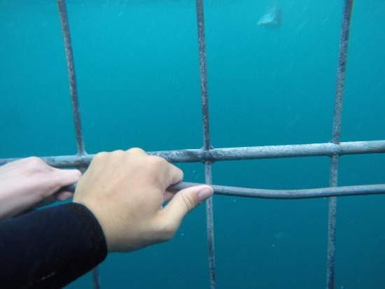 Gansbaai, Sudafrica: The way to stay down is to catch this iron inside the cage. It is there exactly for this reason.