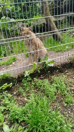 Newquay Zoo: IMG_20170517_161212_large.jpg