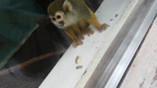 Newquay Zoo: IMG_20170517_141450_large.jpg