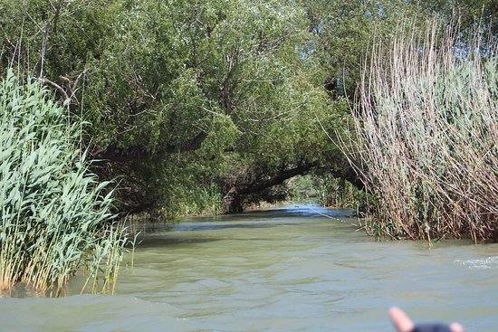One of the old fishing spots bild von danube delta for Delta fishing spots