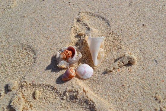 Khai Island: ракушки на берегу