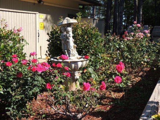 Forsyth, GA: flowers