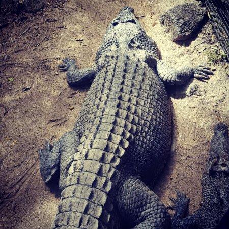 Palm Cove, Australien: Hartley's Crocodile Adventures