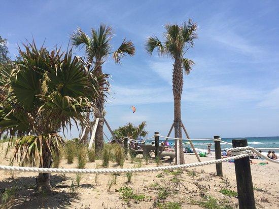 Dania Beach, FL: photo1.jpg