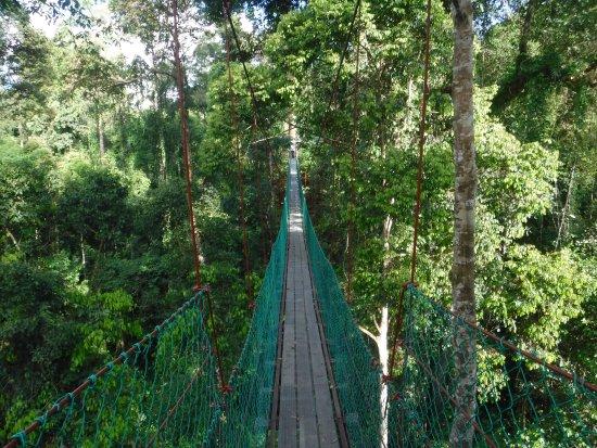 Borneo Adventure - Day Tour Canopy Walk Borneo Rainforest Lodge & Canopy Walk Borneo Rainforest Lodge - Picture of Borneo Adventure ...