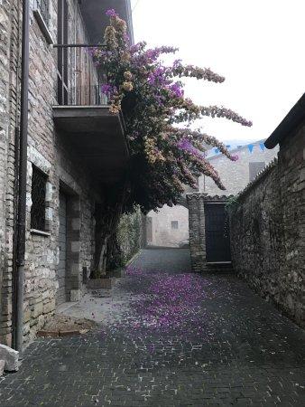 Trattoria Pallotta: photo1.jpg