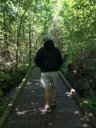 South Mills, Kuzey Carolina: boardwalk through swamp area