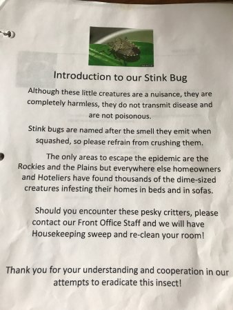 Canfield, OH: I didn't see a single stink bug