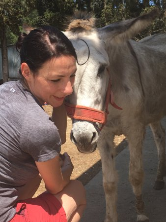 Fantastic Shelter for Donkeys, Cats & Dogs. Support Needed ...
