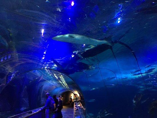 Interior do Aquarium of the Bay