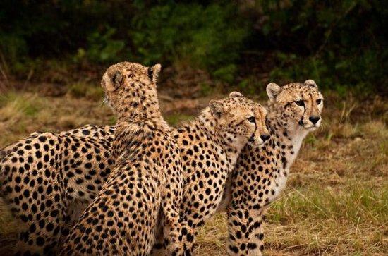 Ann Van Dyk Cheetah Centre Half-Day...