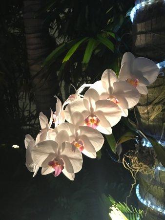 Orchid Key Inn Imagem