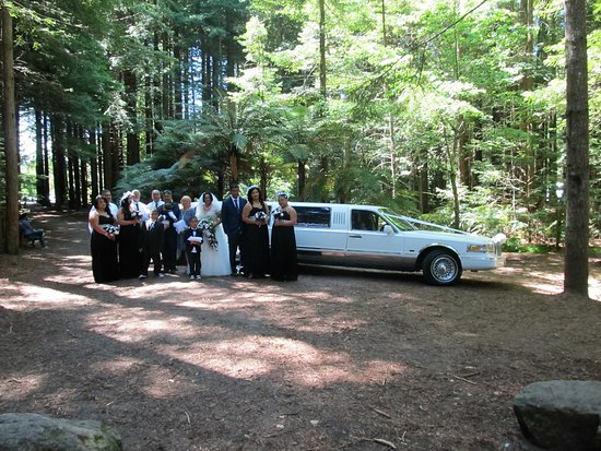 Hamilton, Nya Zeeland: Beautiful Redwoods Wedding