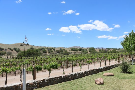Silver City, Nuevo Mexico: La Esperanza Vineyard