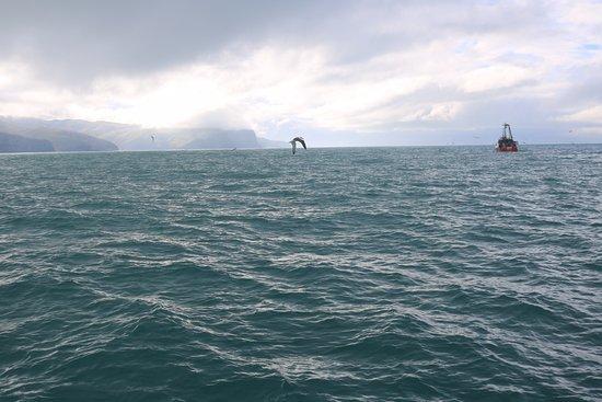 Akaroa, New Zealand: Albatross and trawler