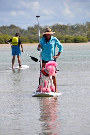 Woodgate, Australia: Dog paddle boarding is our specialty