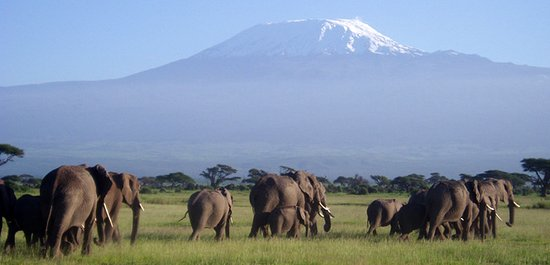 Amboseli National Park, Kenya : Early morning shot..loved the view of Mount Kilimanjaro
