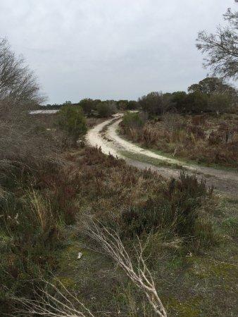 Natimuk, Australie : Dry weather Rd Grass Flat, Flora & Fauna Reserve