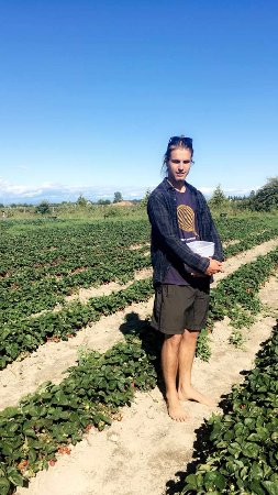 Delta, Canada: Strawberry season-an empty ice cream bucket works best for picking!!
