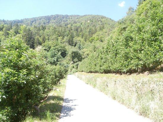 Cermes, Italien: Strada per andare al castello percorribile in macchina, a piedi e in bici