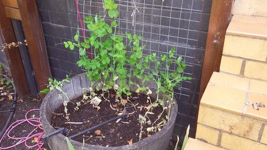 Lyndoch Hill: Kitchen Garden barrel