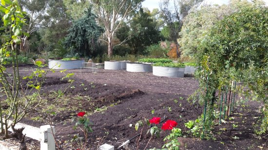 Lyndoch, Australia: More of the kitchen garden used in the menus