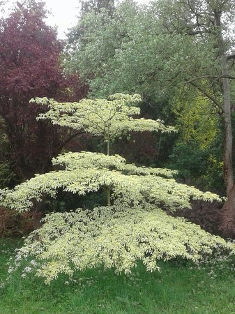 Bedale, UK: Thorp Perrow Garden