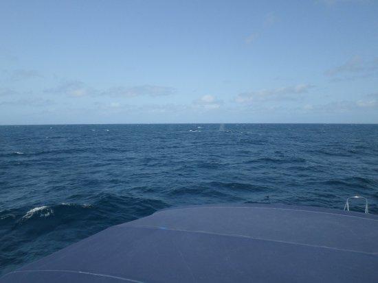 Sal Rei, Cabo Verde: bultrug duikend naast de boot en spuitwater in de verte.