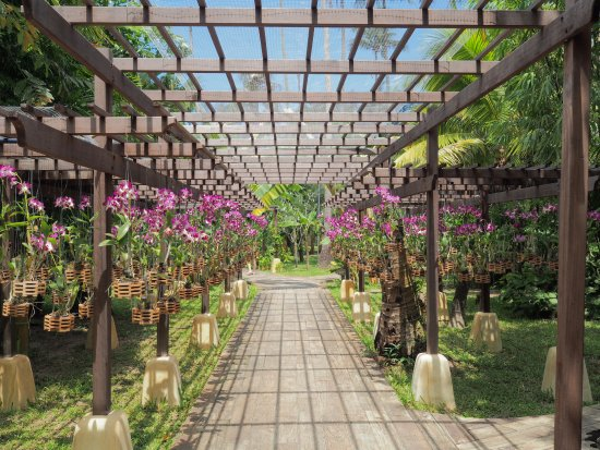 High Season Pool Villa Spa Orchid Nursery Whose Orchids Are Used To Make Welcome