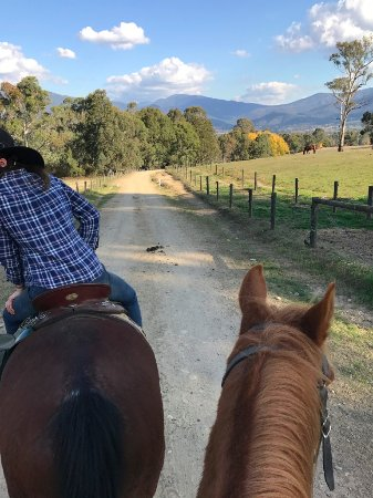 Bogong Horseback Adventures: One of our guides and my horse's lovely head - this is road just leaving Bogong Horseback Advent
