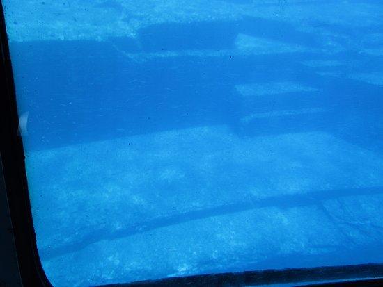 Yonaguni-cho, Japan: 海底遺跡観光船 半潜水艇「ジャックスドルフィン号」から