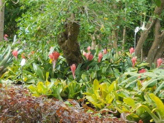 Variétés de fleurs et autres - Picture of Botanical Gardens ...