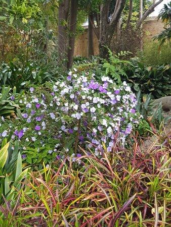 Variétés de fleurs et autres - Bild von Botanical Gardens ...