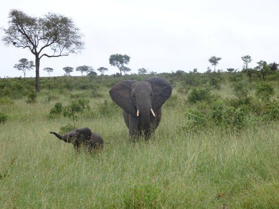 Umkumbe Safari Lodge: DSC00362_large.jpg