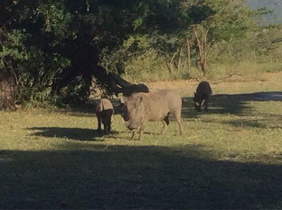 KwaZulu-Natal, South Africa: photo7.jpg