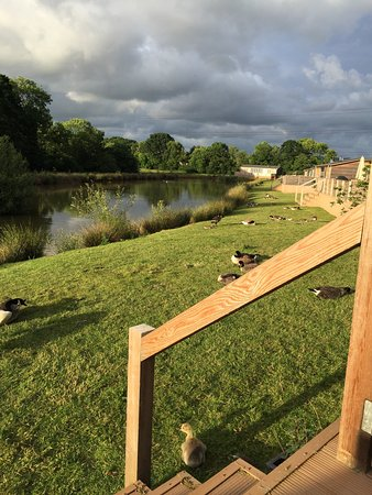Cullompton, UK: Upton Lakes Lodges