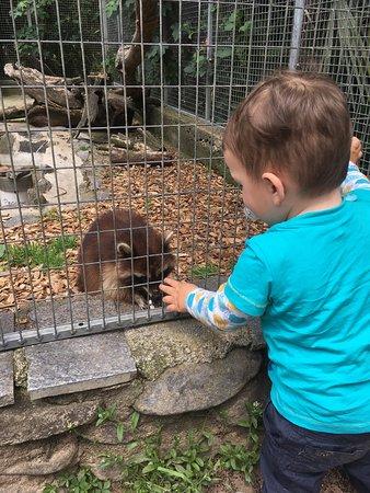 Zoo Al Maglio: photo1.jpg