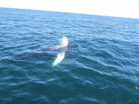 Cape Ann Whale Watch : Whales