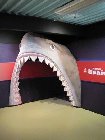De Koog, Holandia: Entrance to the shark experience
