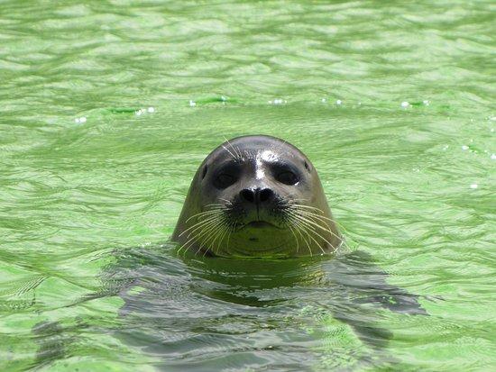 De Koog, Holandia: seal