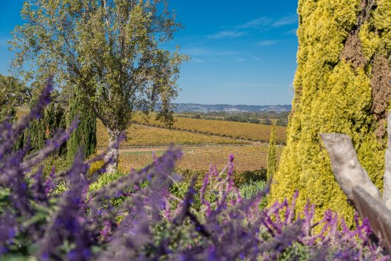 McLaren Vale, Australia: The gardens and views are amazing!