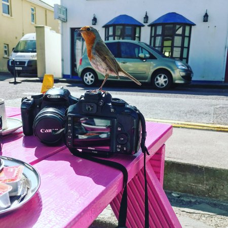 Portmagee, Ιρλανδία: making friends with a local redbreast-bird