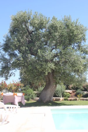 Masseria Galleppa Bild