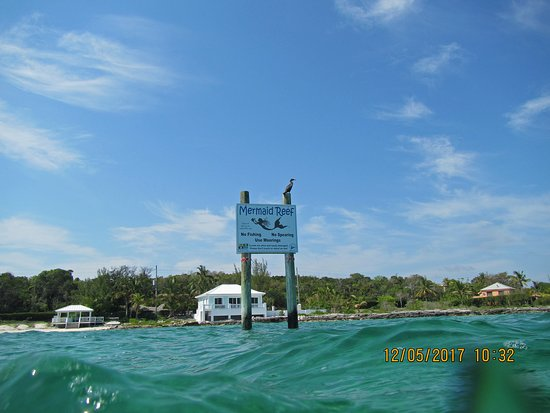 Isola di Grand'Abaco: Even the Cormorant likes it!