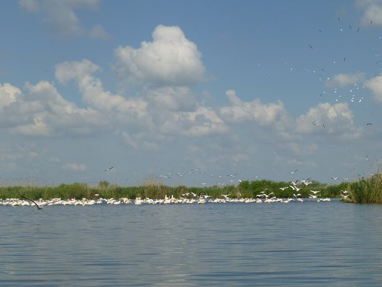 Mila Douazeci si Trei, Rumania: Pelicans colony seen on one of the boat trips