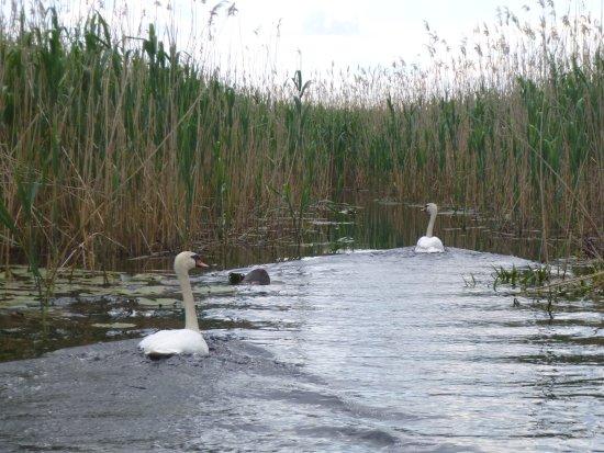 Mila Douazeci si Trei, Rumania: Discovering the Danube Delta channels