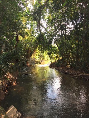 The Orange Guesthouse: Creek running behind the property