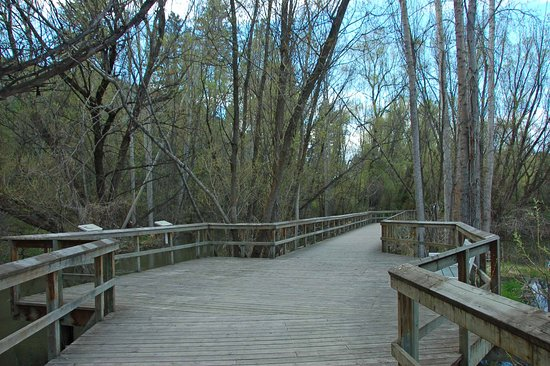 Polson Park: boardwalk is easy to walk on