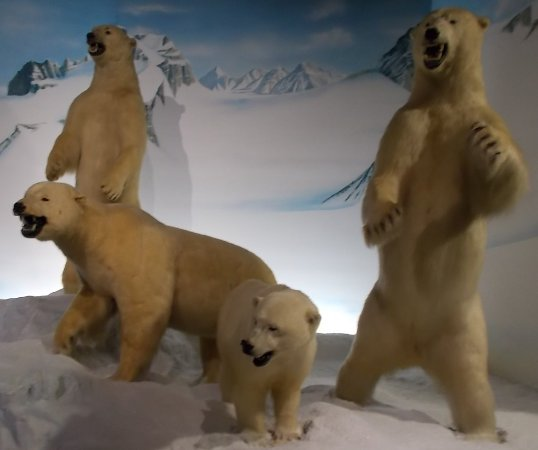 Salina, KS: polar bears inside museum